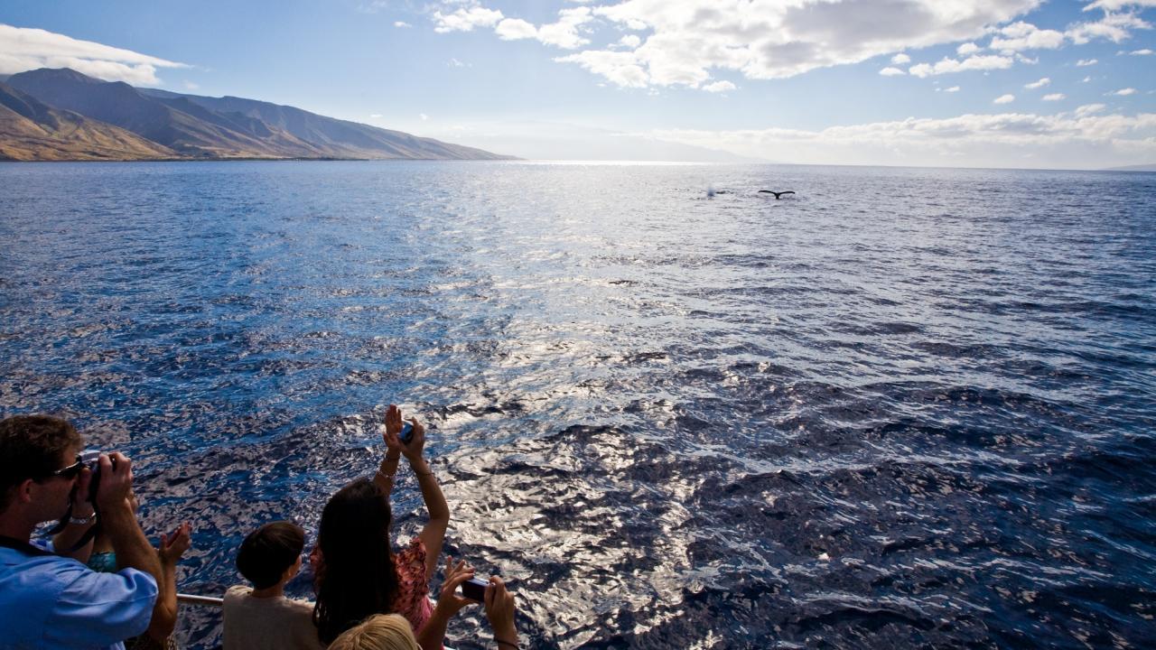 하와이 고래 관찰 투어 중 보게 된 고래 꼬리