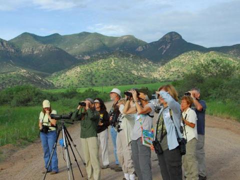 애리조나 주 남동부 투손에서 열리는   조류 축제 구경해보기