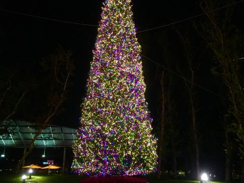 조명을 받아 빛나는 타운 센터 공원의 크리스마스 트리