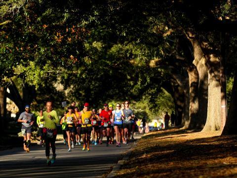 루이지애나 마라톤에서 떡갈나무 아래를 달리는 참가자들
