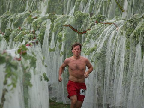 하비스트 스탬피드에서 포도나무 사이 달리기