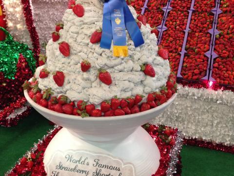 플랜트시티에서 열리는 플로리다 딸기 축제에 전시된 각종 딸기 요리 중 수상 경력에 빛나는 딸기 쇼트케이크