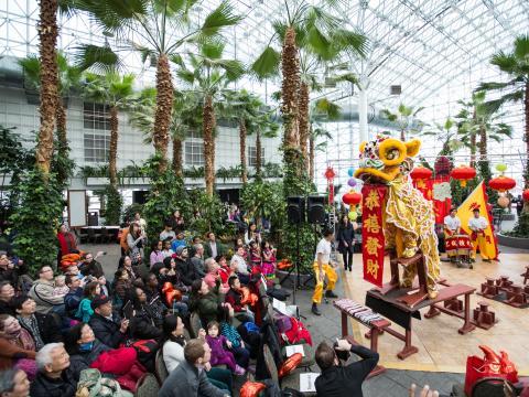중국 새해 축하행사 중 네이비 피어에서 열리는 등 축제
