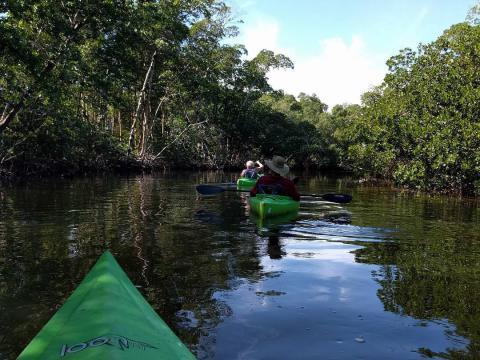 플로리다주 새니벌섬의 J.N. '딩' 달링 국립 야생동물 보호구역에서 카약 타기